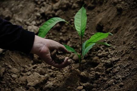 plantando un arbol: Mujeres que plantan un �rbol