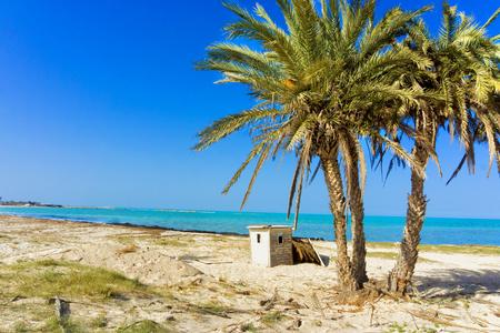 Beautiful landscape of the Mediterranean sea with palm trees in Djerba, Tunisia Stock Photo