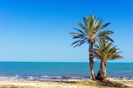 Piękny krajobraz Morza Śródziemnego z palmami w Djerba, Tunezja