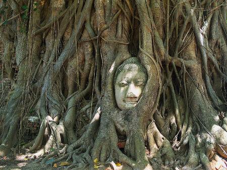 Buddha head 版權商用圖片