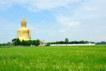 Rice field of big buddha thailand photo