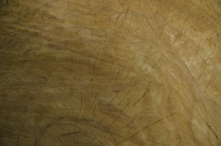 Detail of Stump tree photo