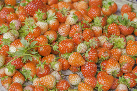 'odd one out': Strawberry on sale of market