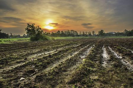 ploughed field: Tillage of sunrise