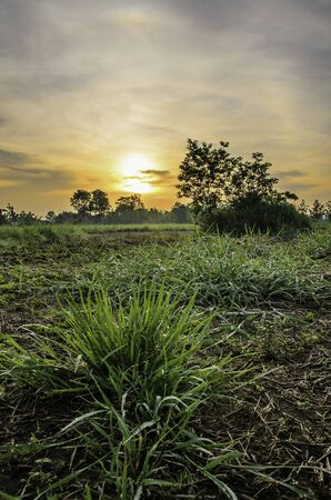 ploughed field: green grass of sunrise Stock Photo