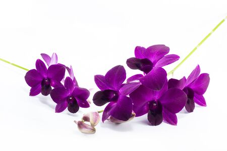 orchid isolated on a white background Banque d'images
