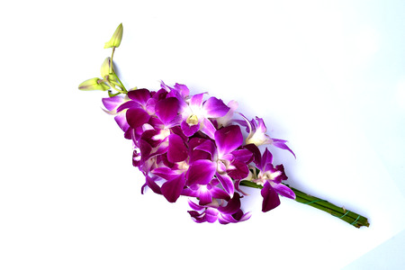 dendrobium: beautiful purple dendrobium orchid flowers isolated on white background Stock Photo