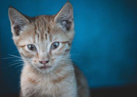 Homeless kitten looks carefully.Homeless kitten looks carefully