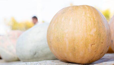 Pumpkin as background and texture.Pumpkin as background and texture Imagens