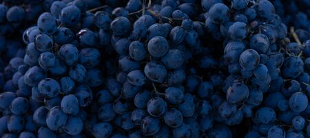 Grapes as background and texture.Grapes as background and texture Stock Photo