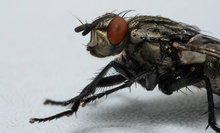 Macro photo of a fly as a background.Macro photo of a fly as a background