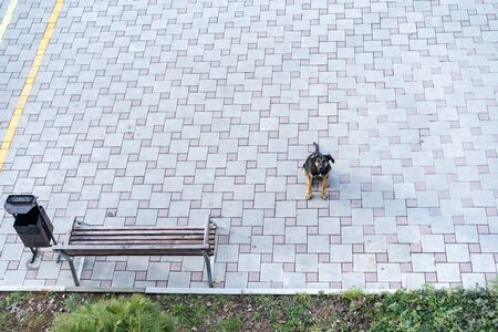 A stray dog is waiting while sitting on the sidewalk