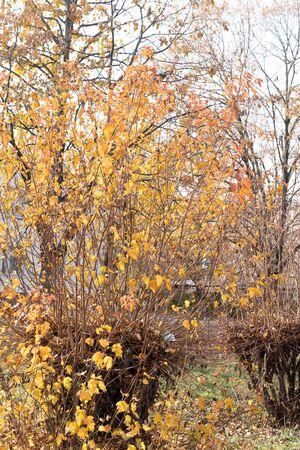 Felled tree grows again, autumn photo.Felled tree grows again, autumn photo Archivio Fotografico