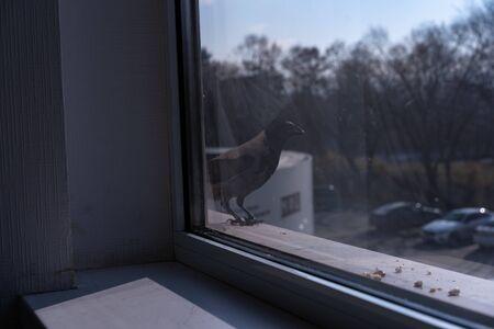 Crow flew in to eat nuts.Crow flew in to eat nuts Stock Photo