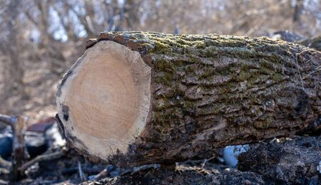 The tree cut down by the person remained on the earth