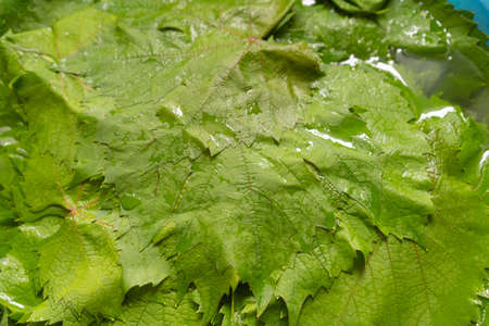 Grape leaves for cooking dolma