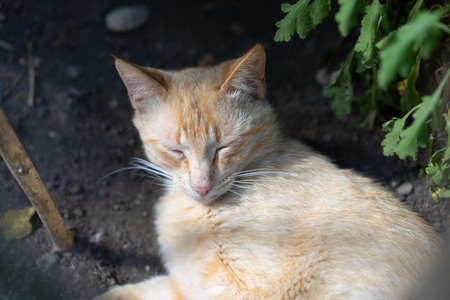 The cat sleeps in the shade next to the flowers
