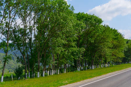 Trees growing along the road