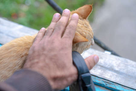 Man stroking a stray cat on the street