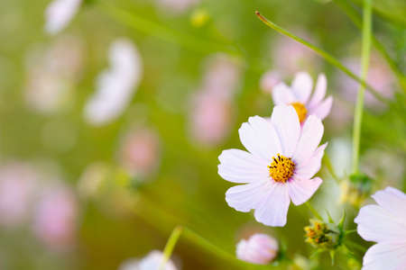 Growing flower on the background of plants