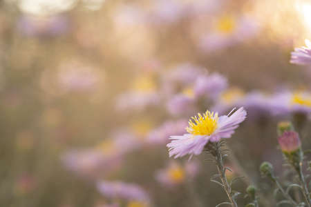 Flowers grow in the sun