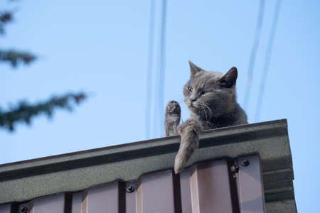 Cat resting on the roof of the house