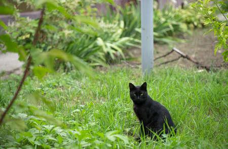 Black cat on the street Stock fotó