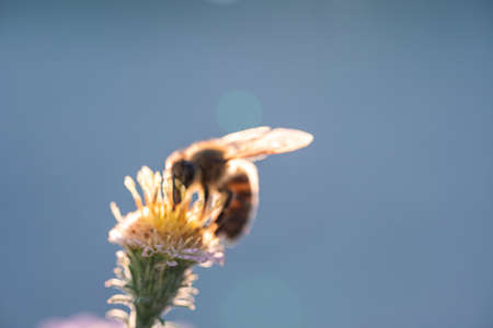 A bee sits on a growing flower