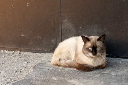 A stray cat lies on the street