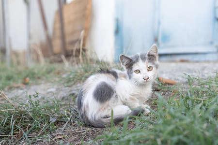 Homeless kitten sitting on the ground
