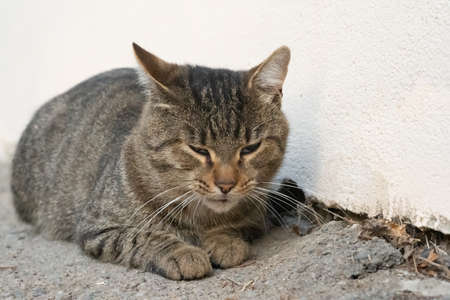A stray cat lies on the ground