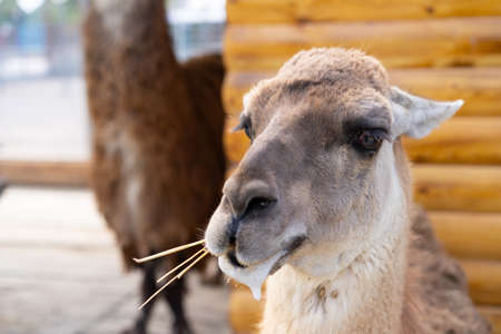 The attentive gaze of a young lama