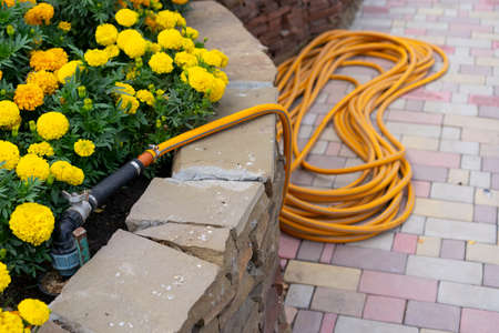 Water hose for watering plants