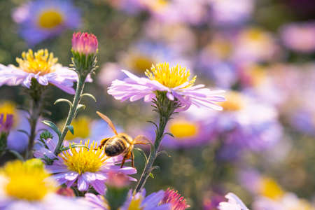 A bee sitting on a growing flower