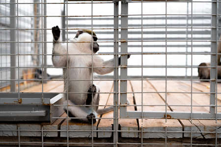 The monkey is in the zoo cage