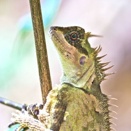 Tree lizard photo
