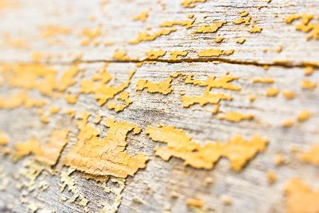 nature abstract: Teak wood texture and background