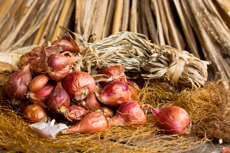 tuft: Red onion tuft in still life style