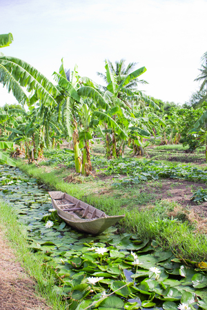 farming area: Mixed vegetable farming in backyard area, and make that land very useful Stock Photo