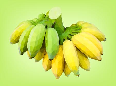 Cultivated banana half-ripe and unripe Vector Illustratie