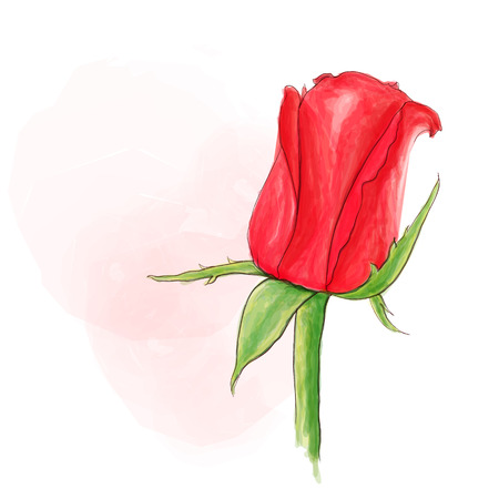 Single red rose vector with watercolor style.