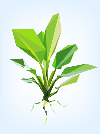 Polygon vector dieffenbachia tree