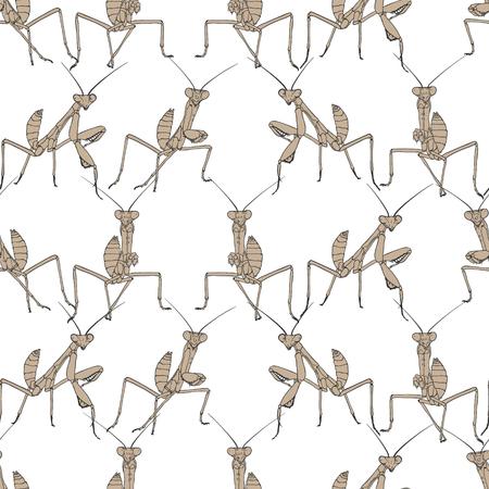 Brown mantis on white seamless background. Vettoriali