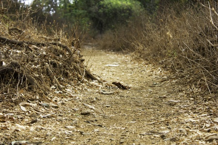 dirt road, walkway in forest, pathway Stock Photo - 13533654
