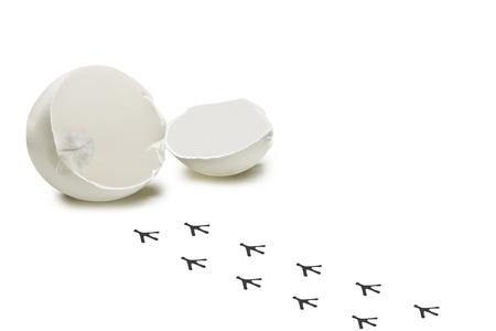 tojáshéj: Léptek a nyomvonalat a csirke fehér, nyílászáró tojáshéj a háttérben. Stock fotó