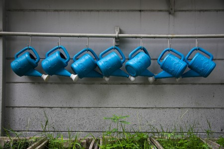 ladle water plant