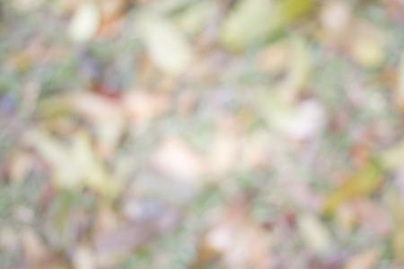 hojas secas: Desenfoque hierba y caído fondo hojas secas. Tono de la tierra de fondo. Foto de archivo