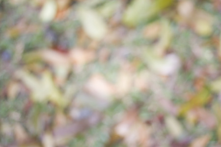 earth tone: Blur grass and fallen dry leaves background. Earth tone background.