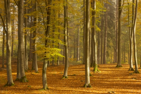 Autumn Forest Kashubia, Poland photo