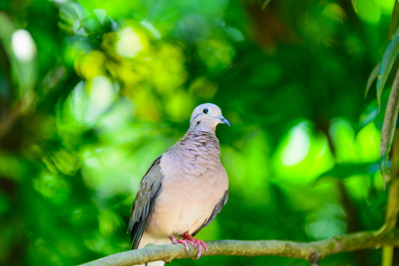relaxing wood Dove Stock Photo